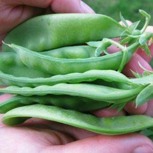 edible pods